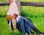Lavender Rooster(sold)